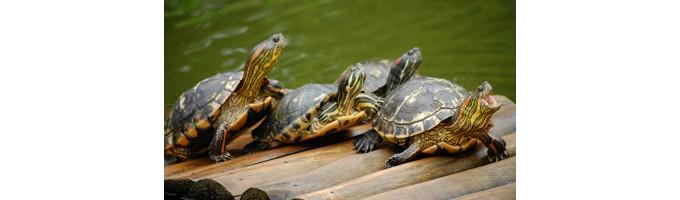 Для черепах и рептилий